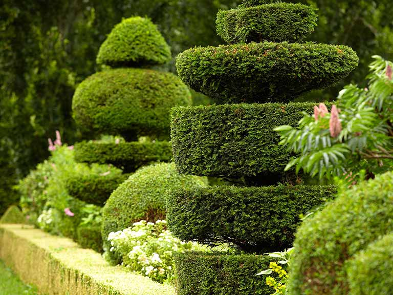 Topiary Ideas Part - 24: 16 Marvellous Topiary Ideas