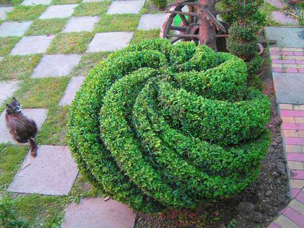 16 Marvellous Topiary Ideas Live Diy Ideas